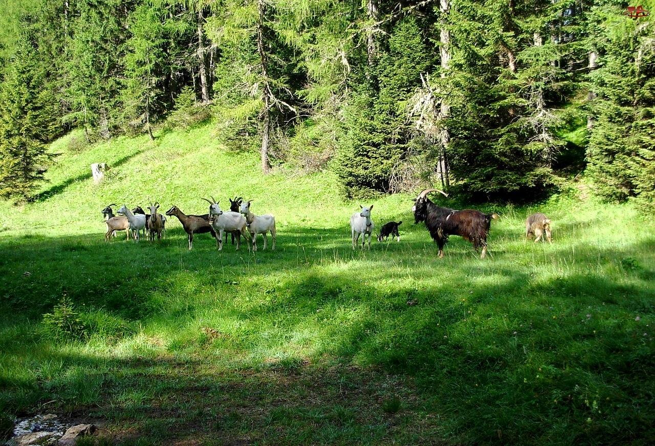 Las, Kozy, Łąka