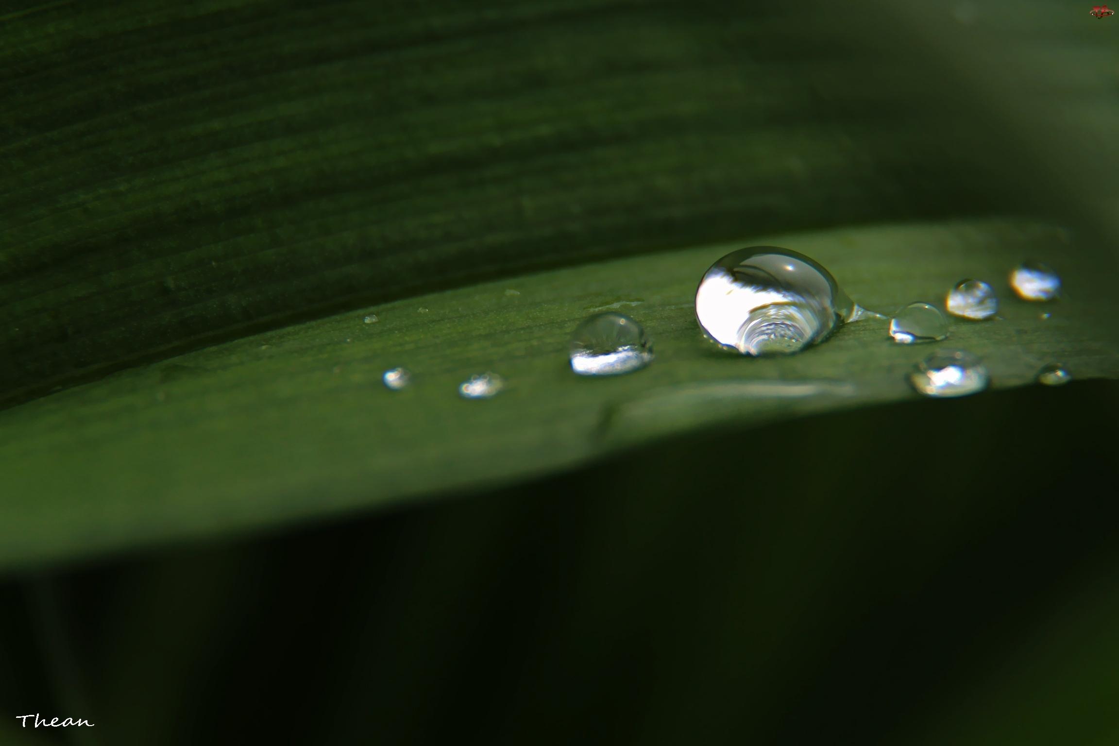 Liść, Krople, Deszczu