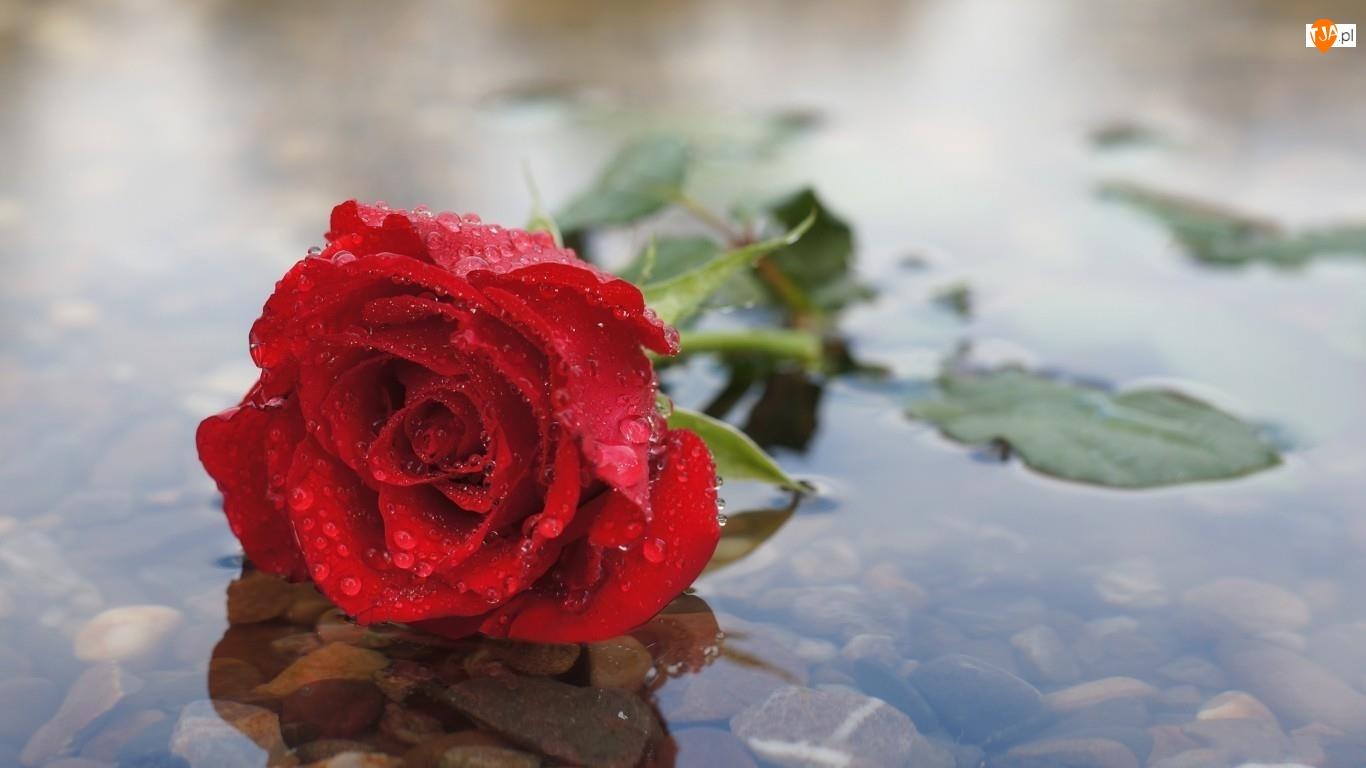 Kamienie, Róża, Rzeka