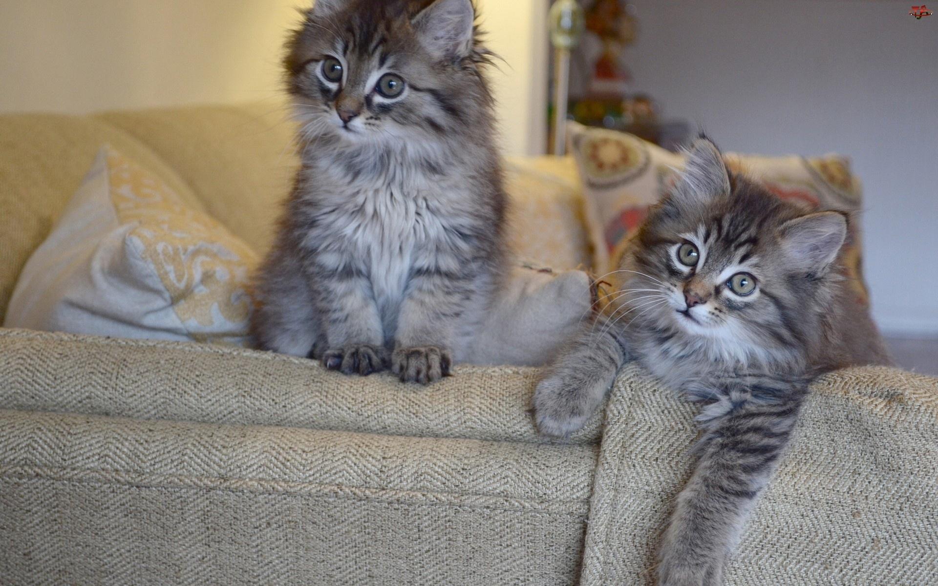 Kanapa, Dwa, Kotki