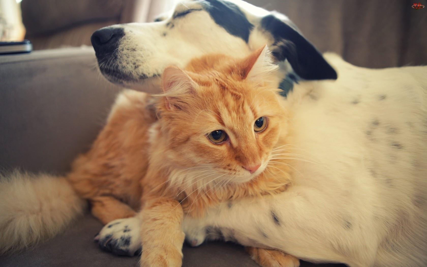 Przyjazń, Pies, Kot