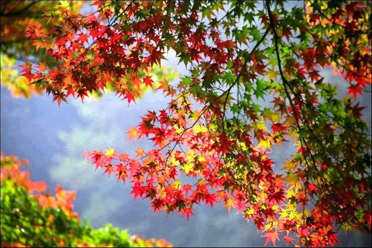Jesień, Kolorowe, Liście