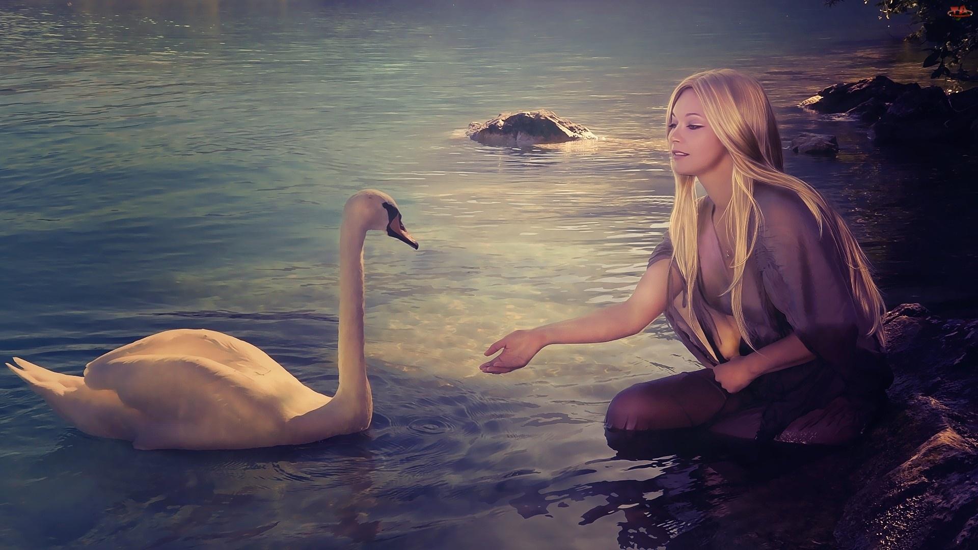 Łabędź, Kobieta, Blondynka
