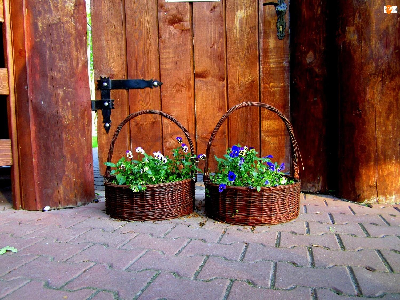 Koszyki, Kwiaty, Bratki