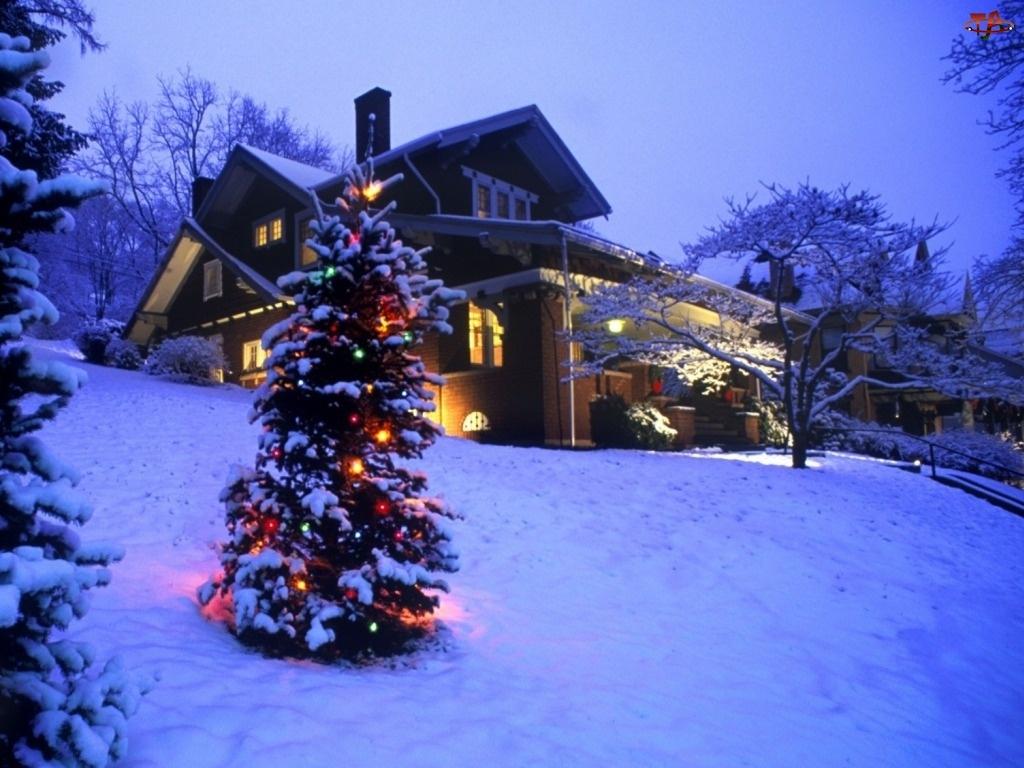 Choinka, Zima, Dom, Boże Narodzenie, Oświetlona
