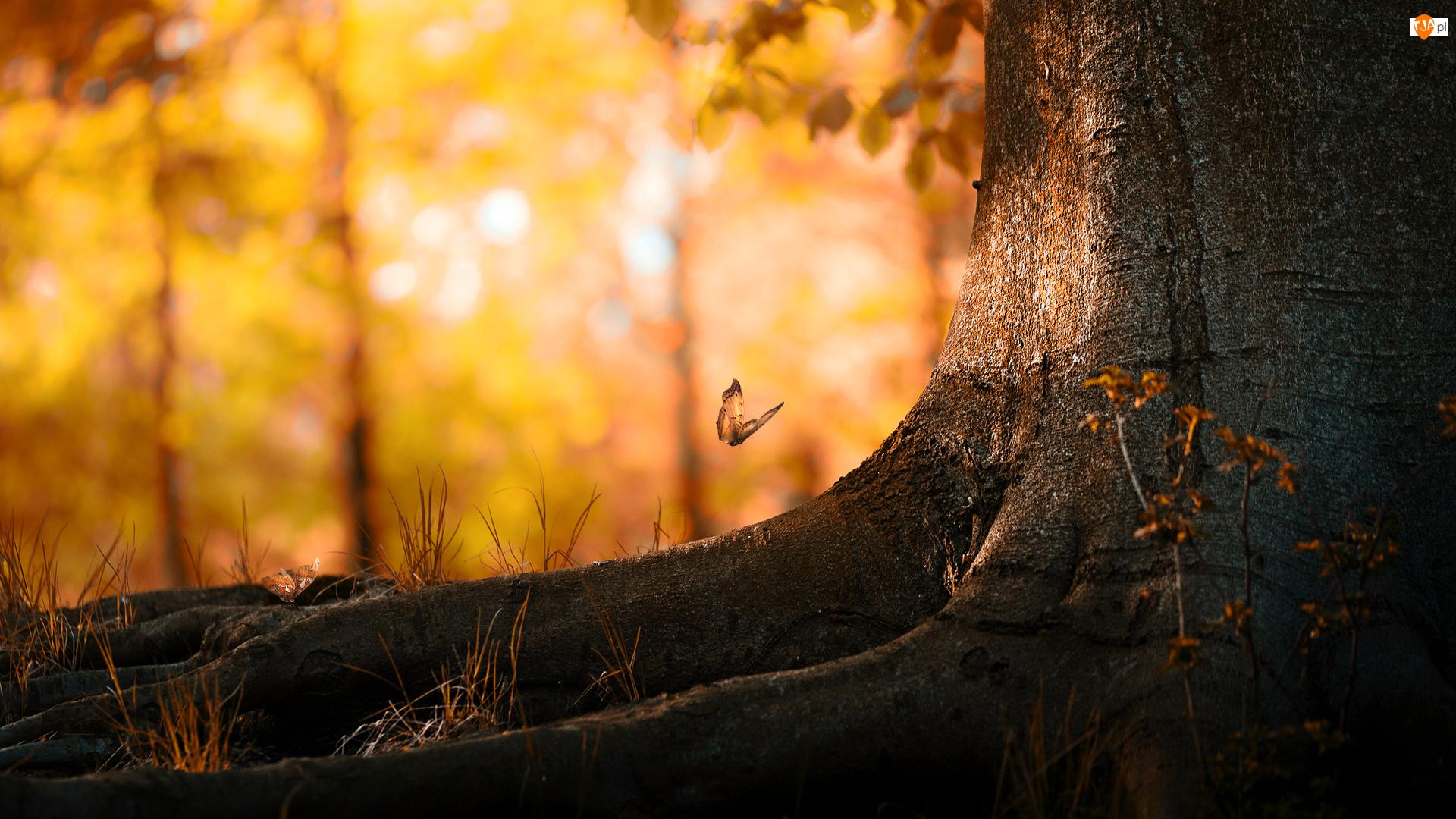 Motyl, Drzewo, Korzenie, Pień