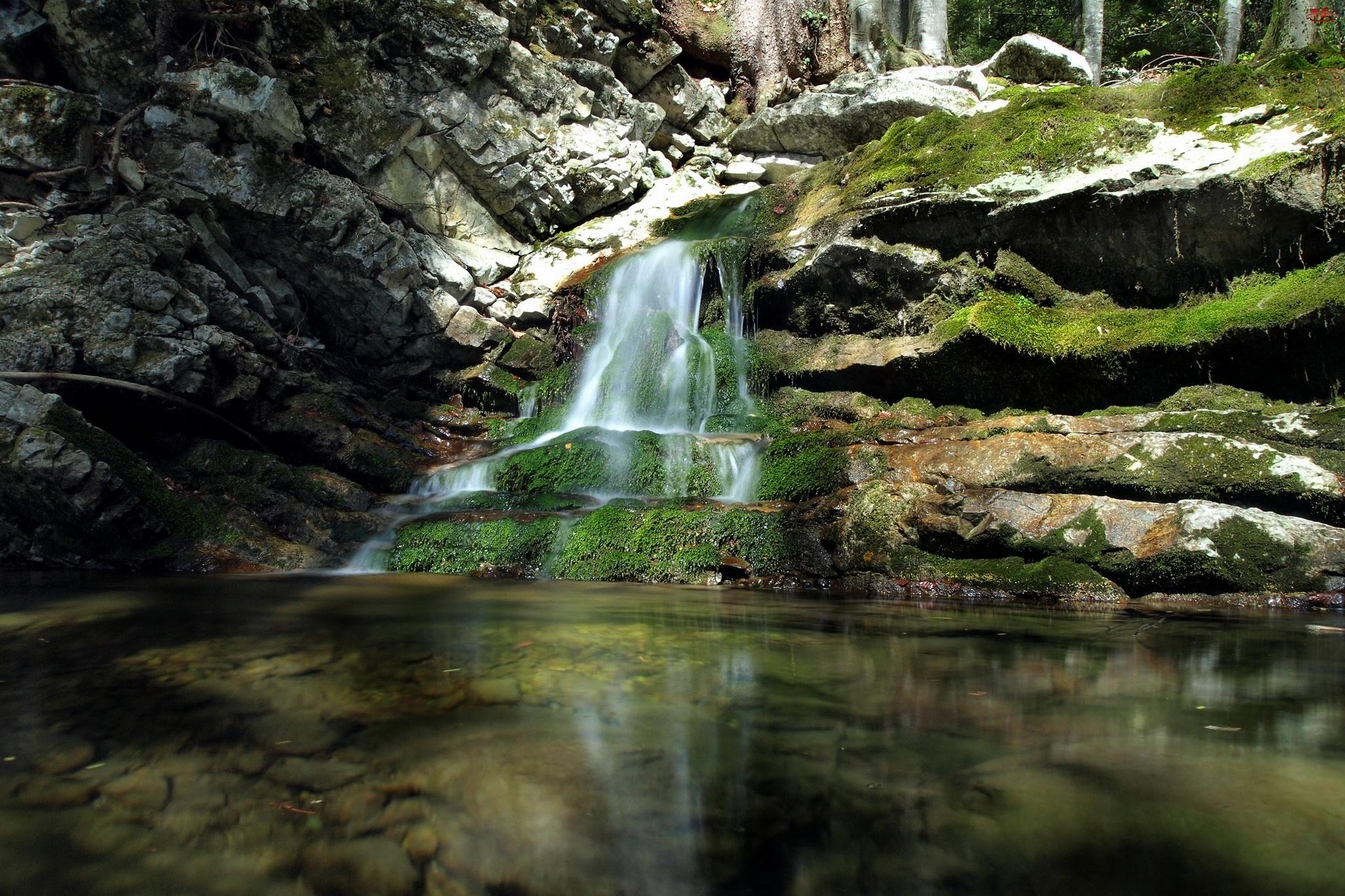 Roślinność, Wodospad, Skały