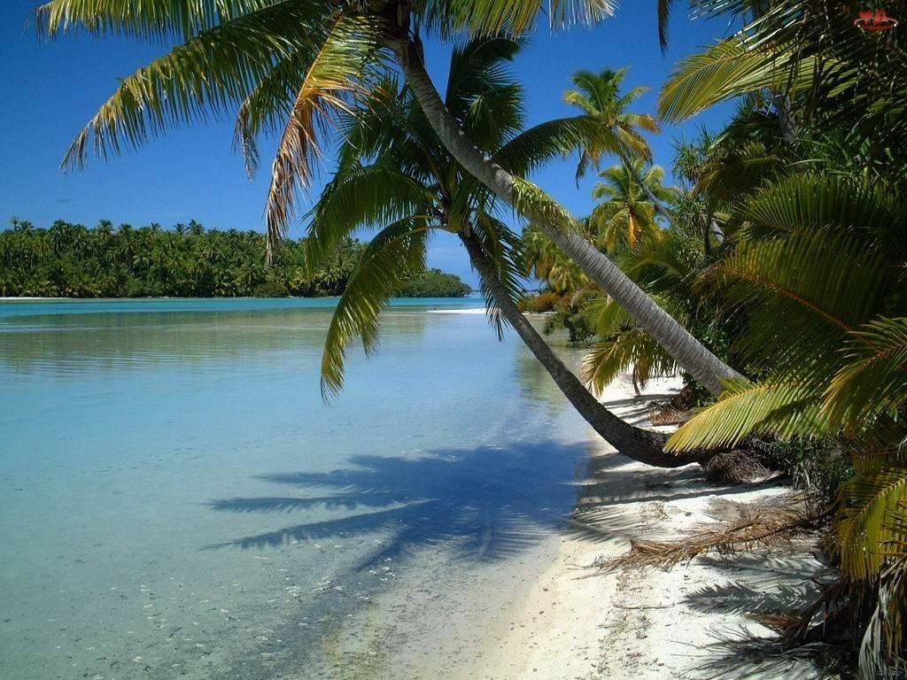 Aitutaki, Palmy, Islandia, Woda