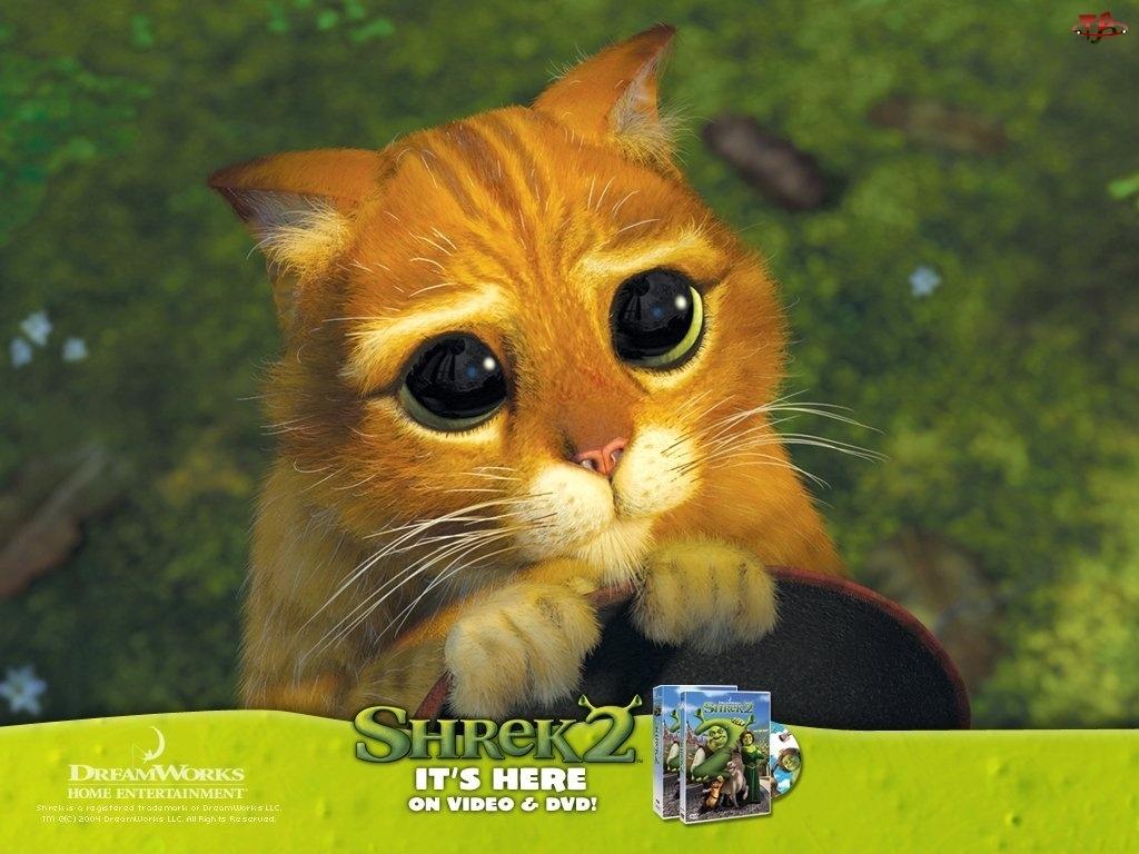 kota, Shrek 2, oczy