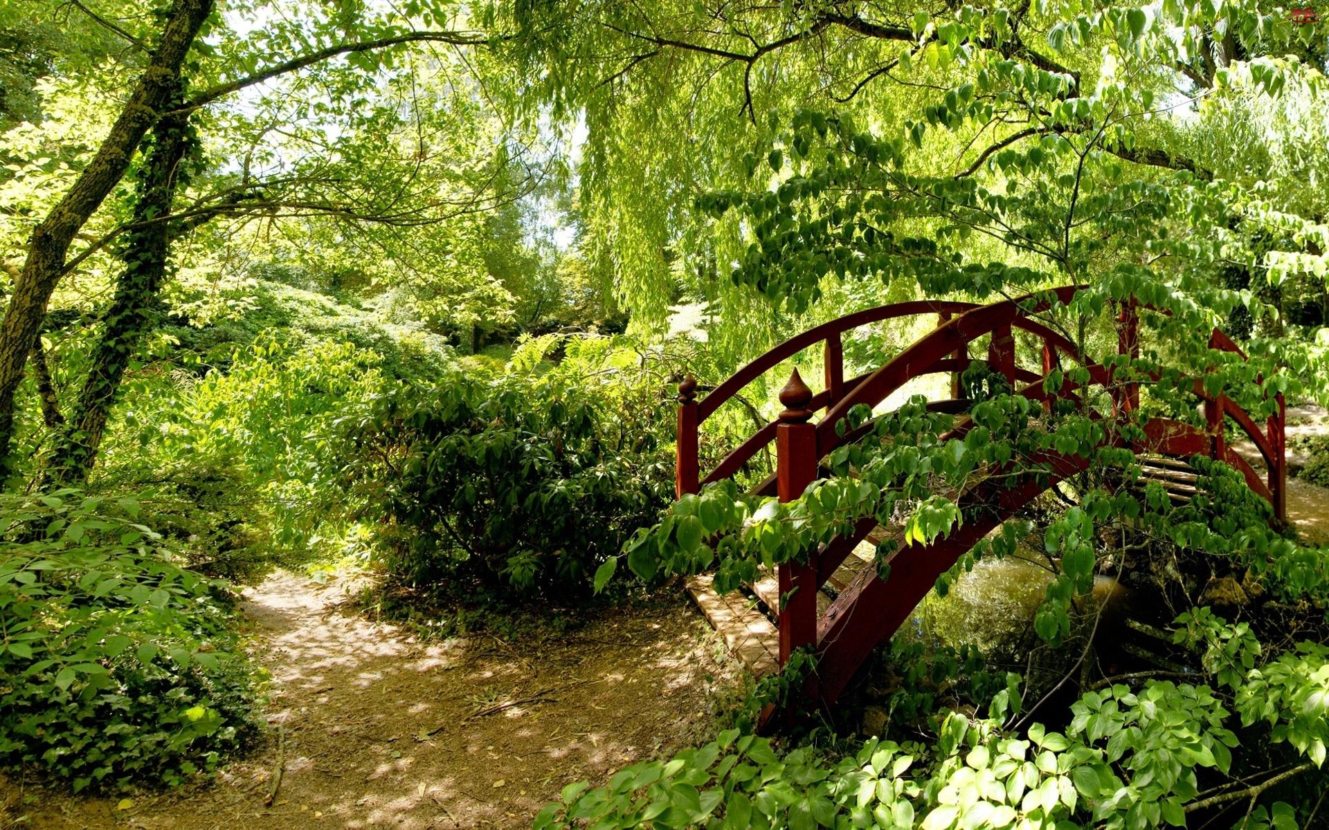 Park, Mostek, Drzewa, Krzewy