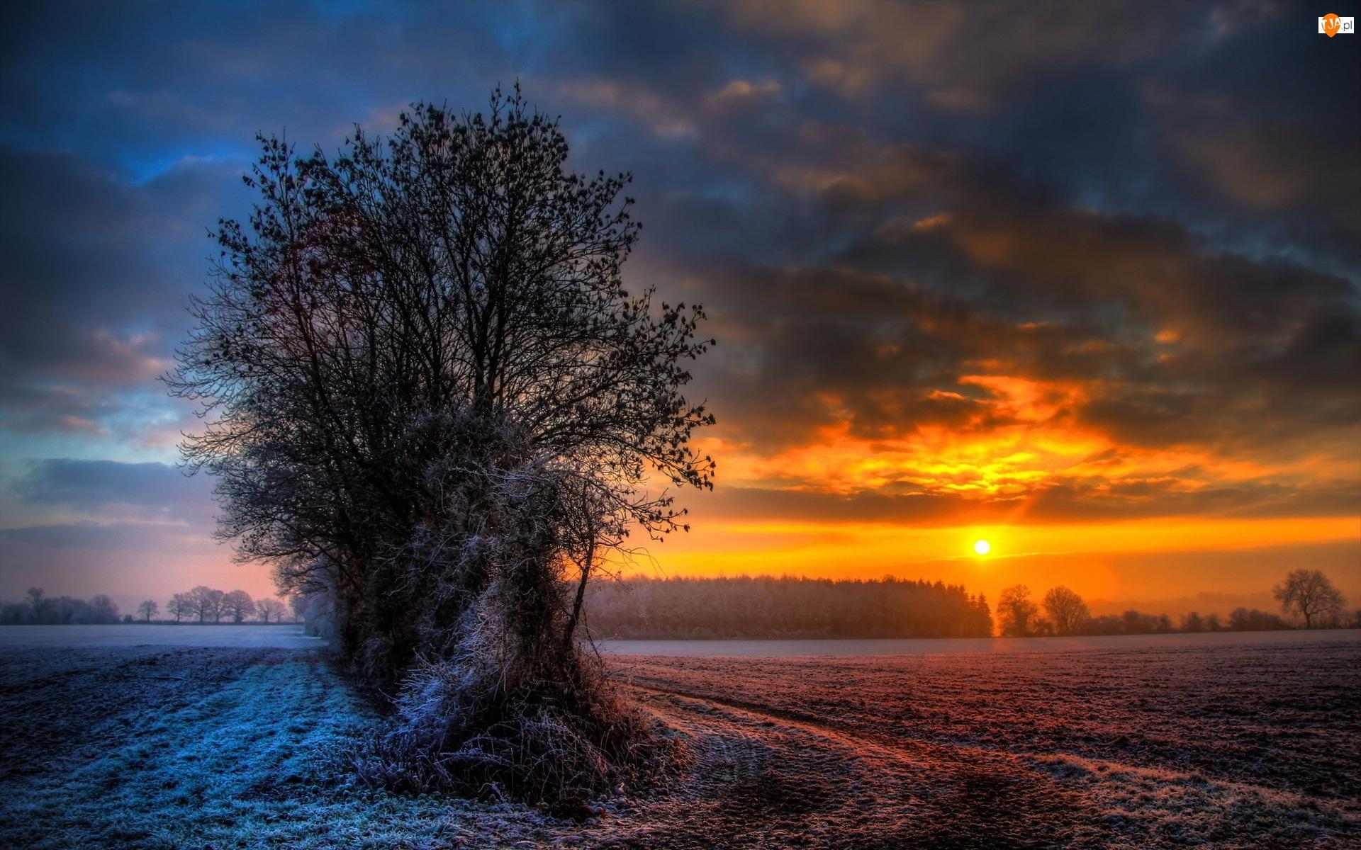 Szadź, Drzewa, Zachód, Pole, Słońca