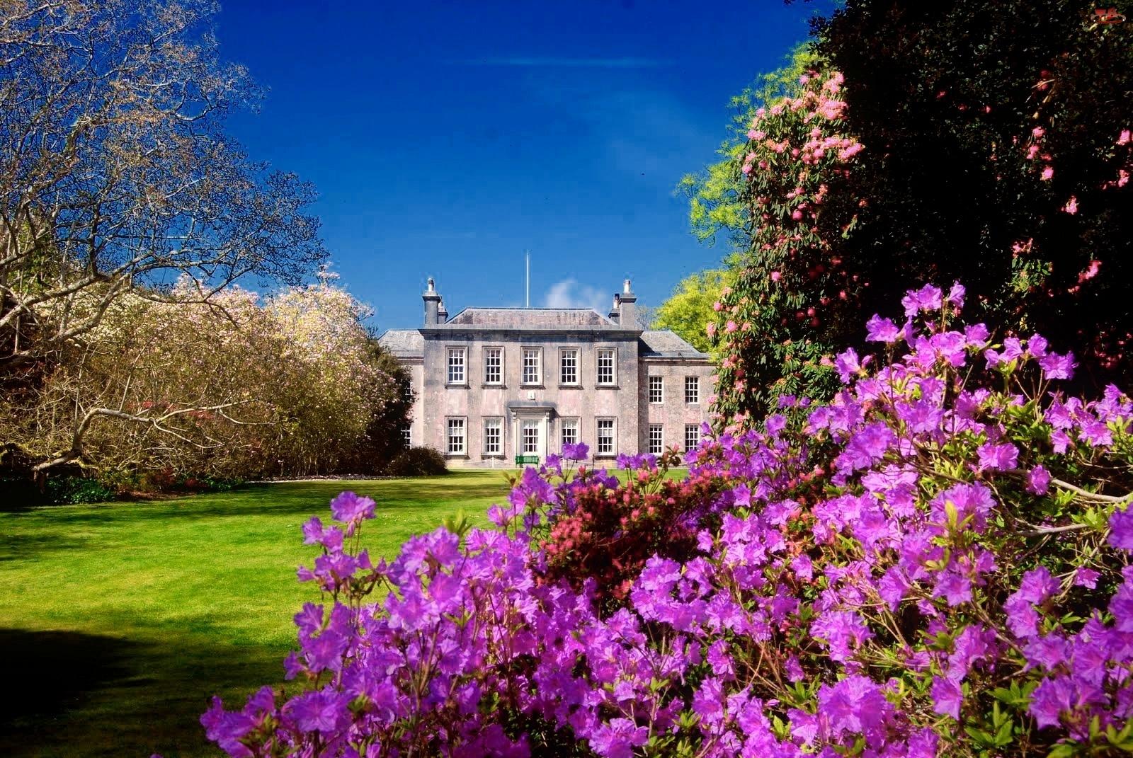 Rododendrony, Pałac, Kwitnące, Park, Drzewa