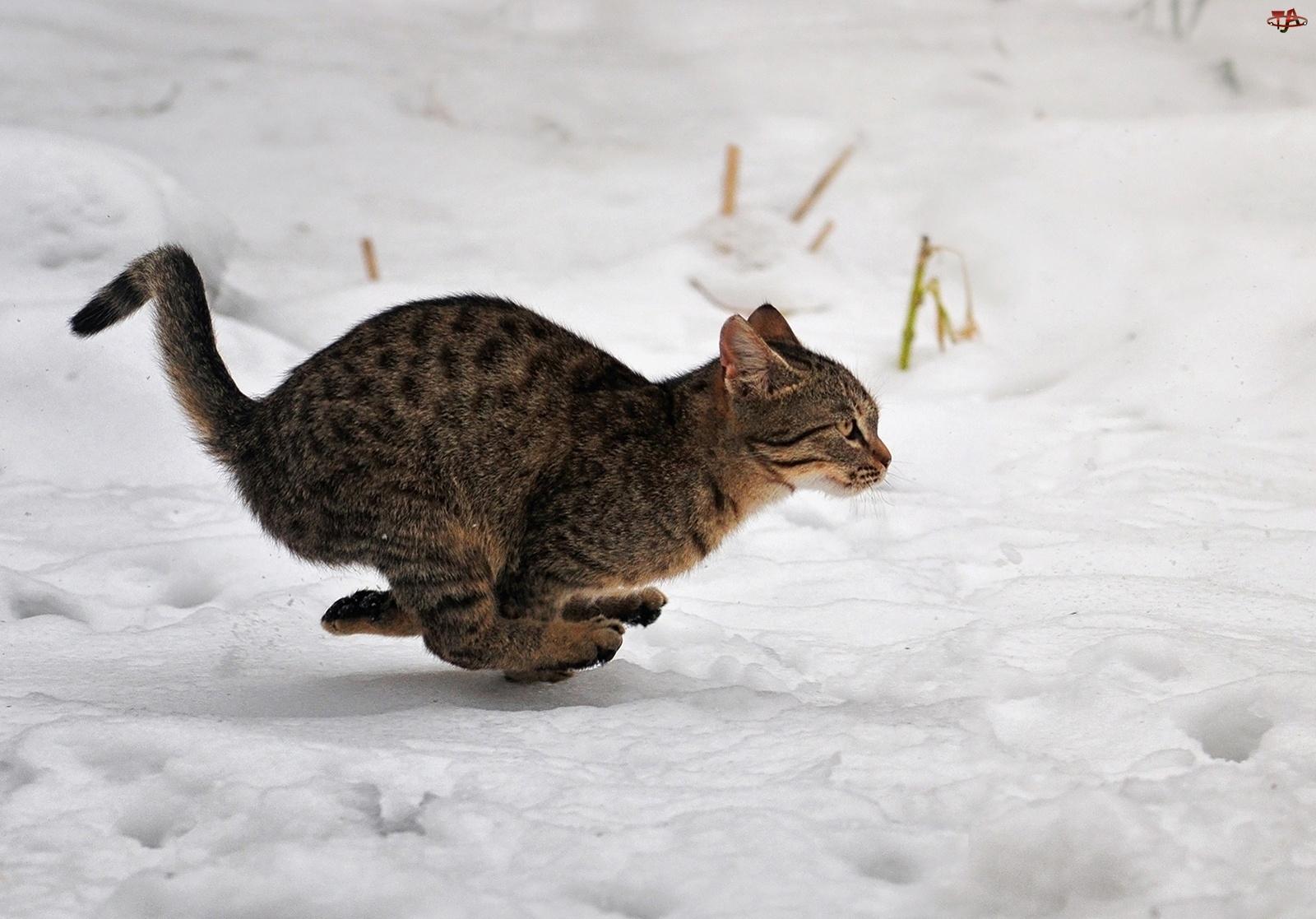 Kot, Śnieg