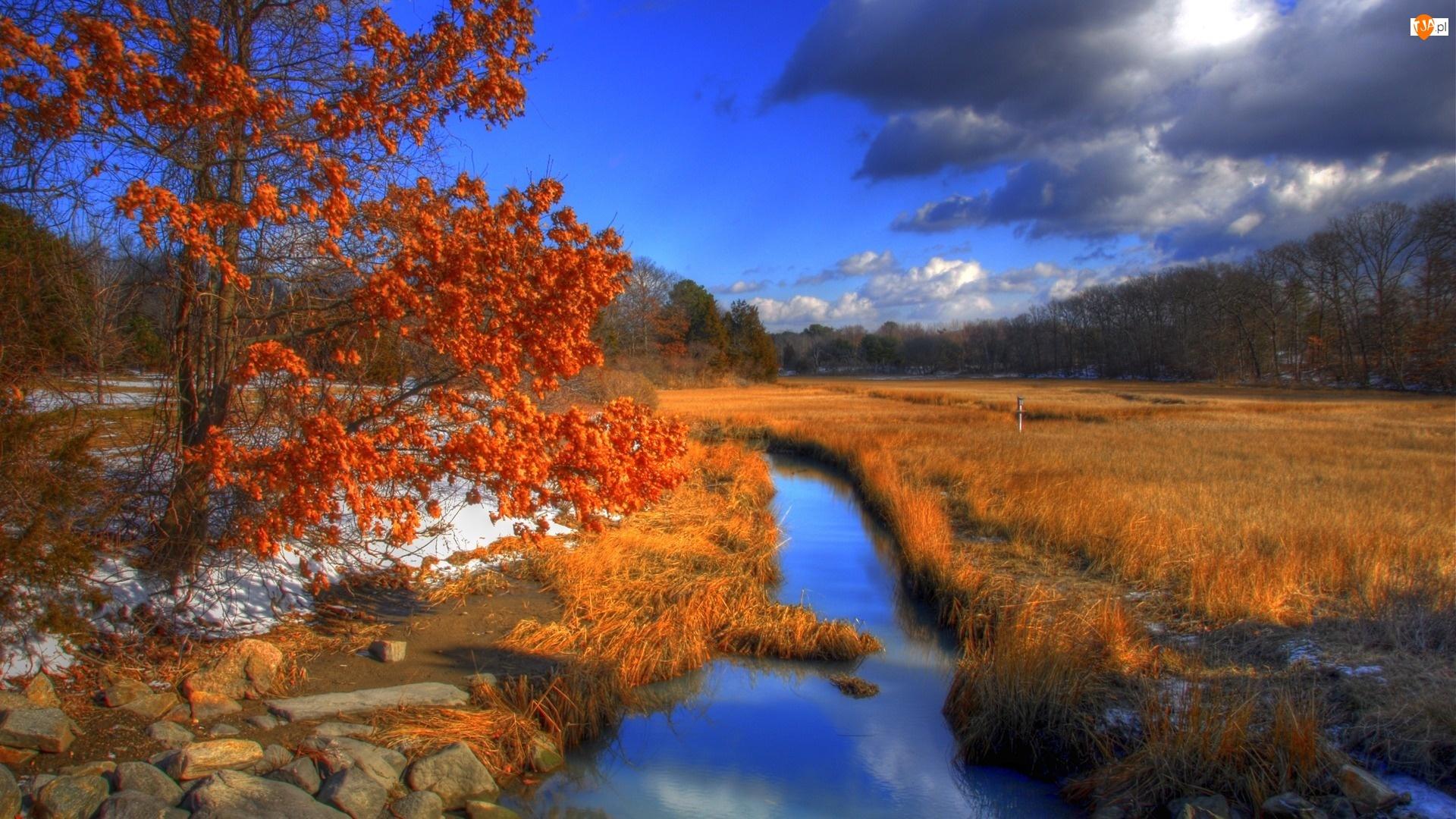 Łąka, Las, Jesień, Drzewo, Rzeka, Trawa