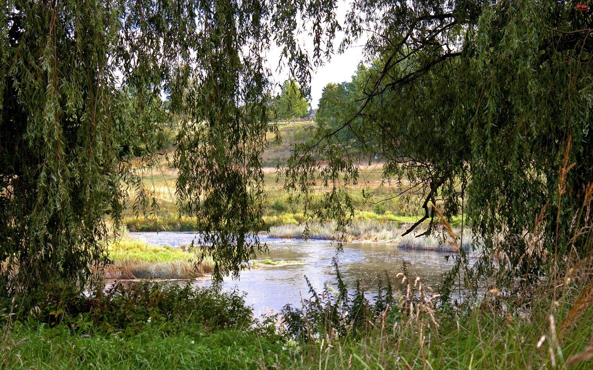 Rzeka, Trawy, Łąki, Drzewa