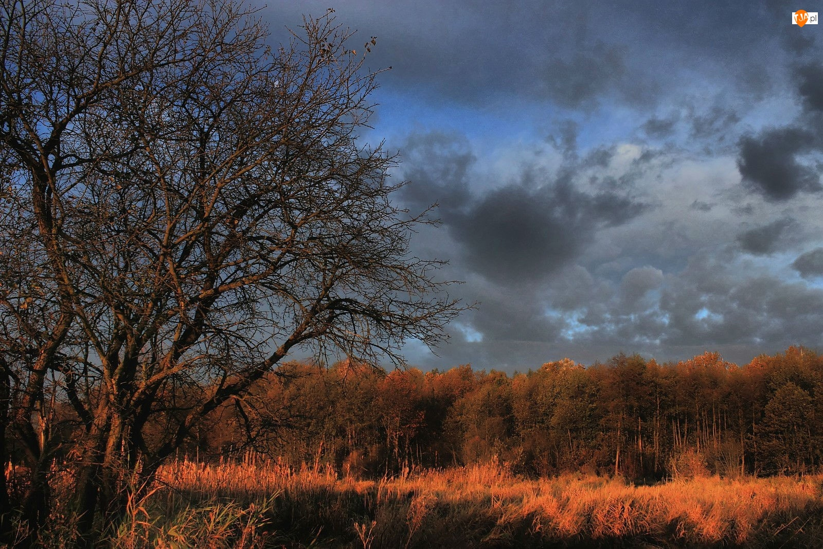 Jesień, Chmury, Drzewa, Burzowe