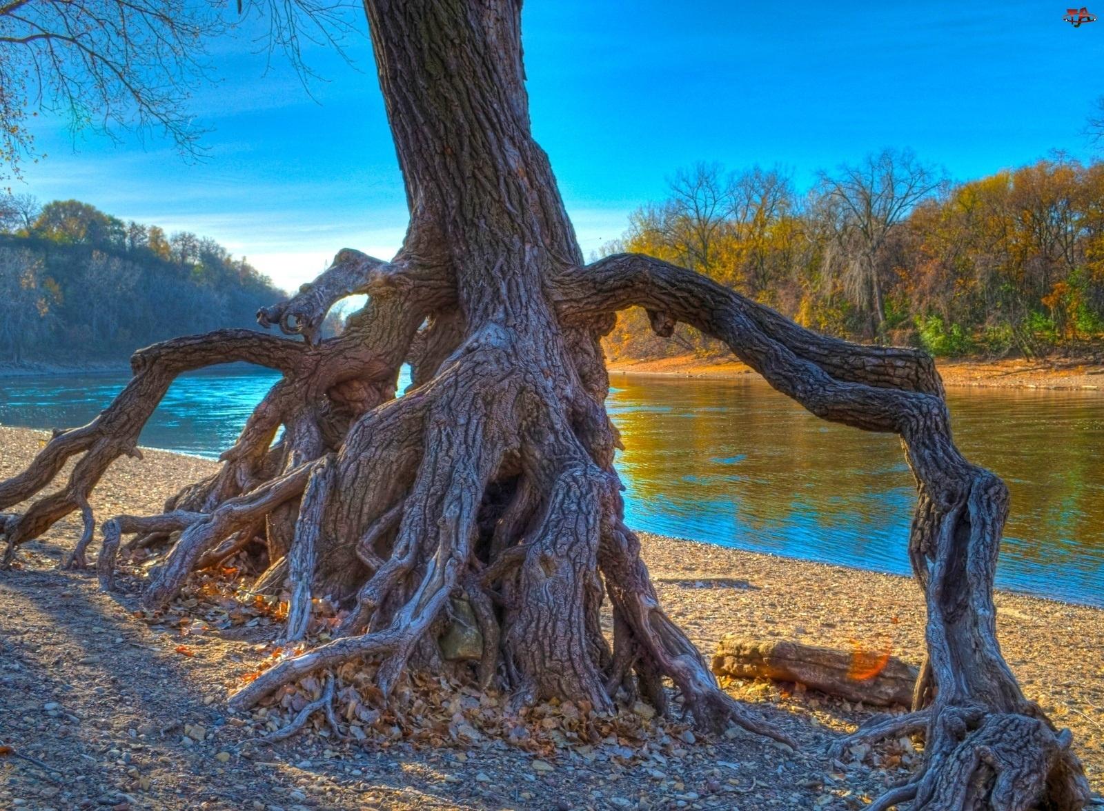 Rzeka, Drzewo, Korzenie