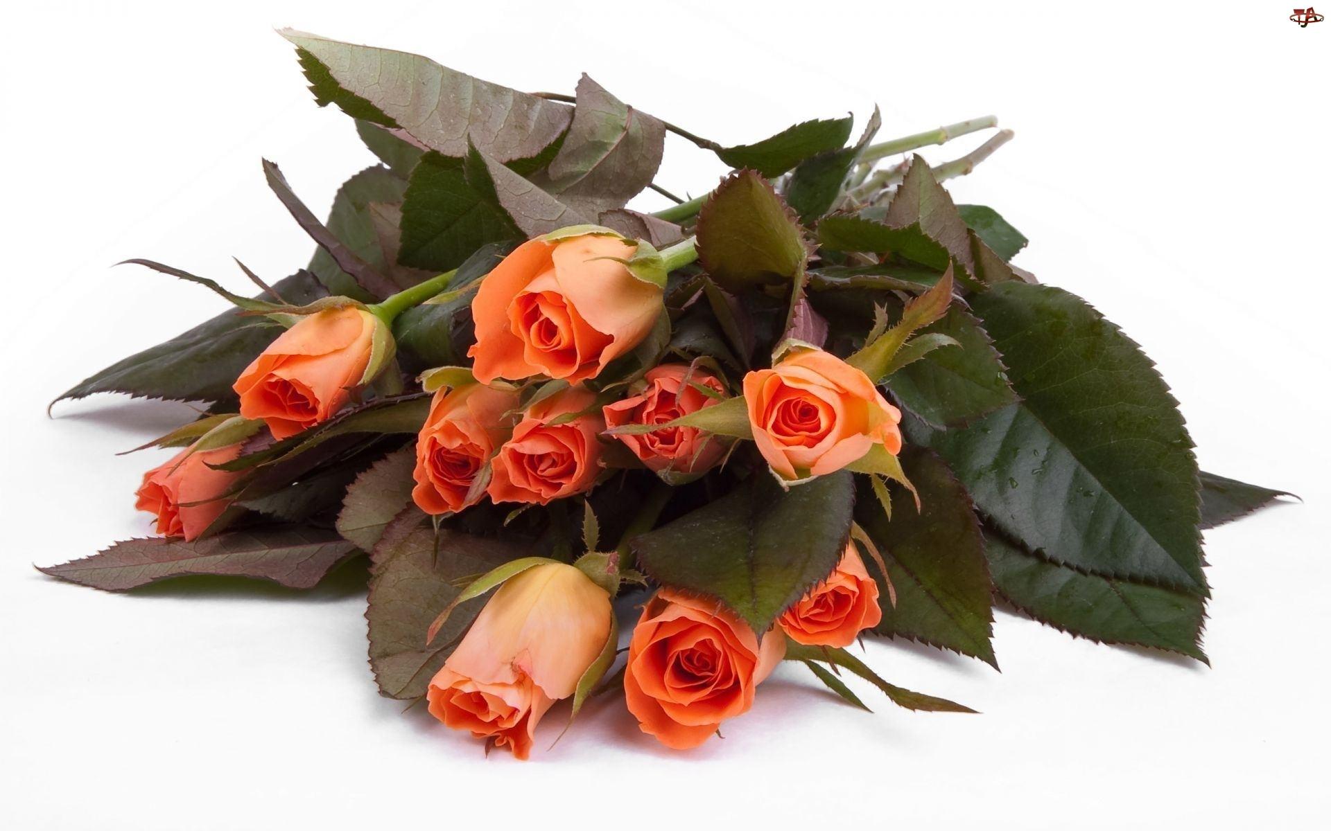 Bukiet, Herbaciane, Róże