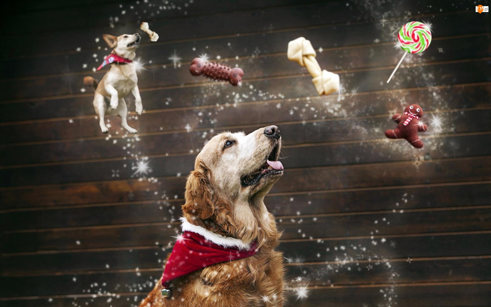 Przysmaki, Pies, Golden retriever