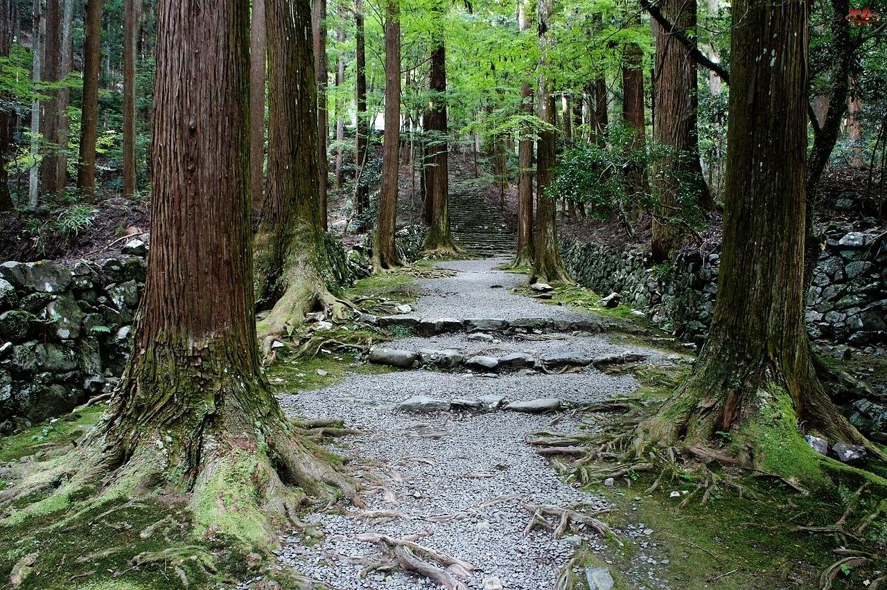 Las, Drzew, Ścieżka, Pnie