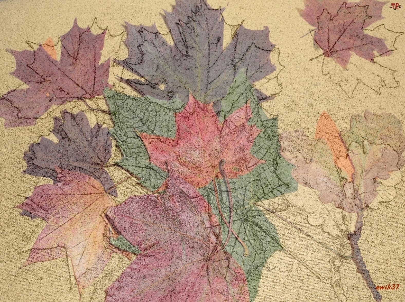 Jesień, Odcienie, Liście, Klonu