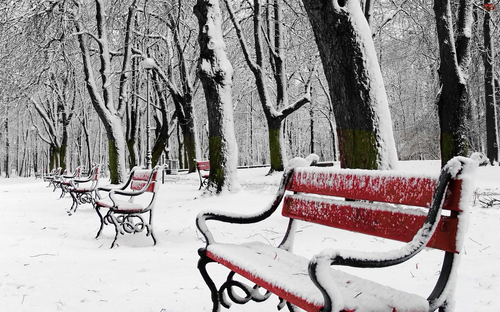 Park, Zima, Drzewa, Ławki