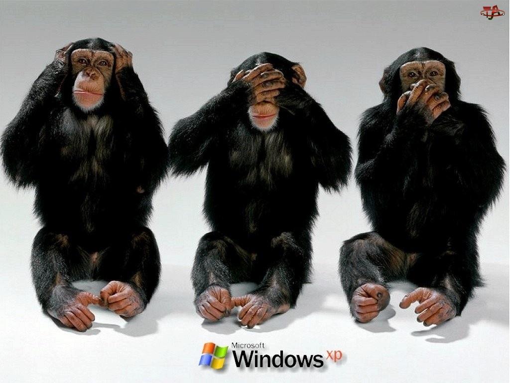 Windows, Trzy, System, Szympansy, Operacyjny, XP