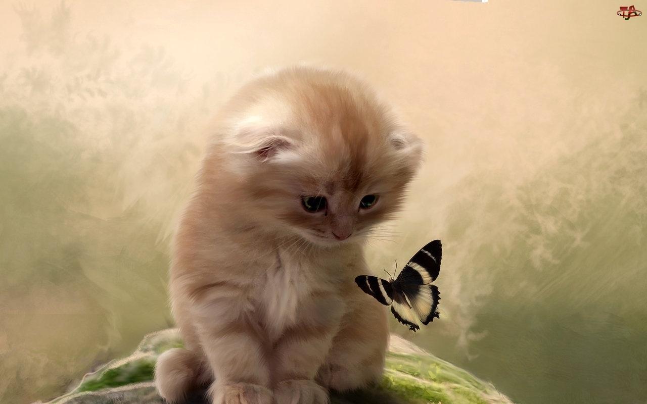 Motylek, Mały, Kotek