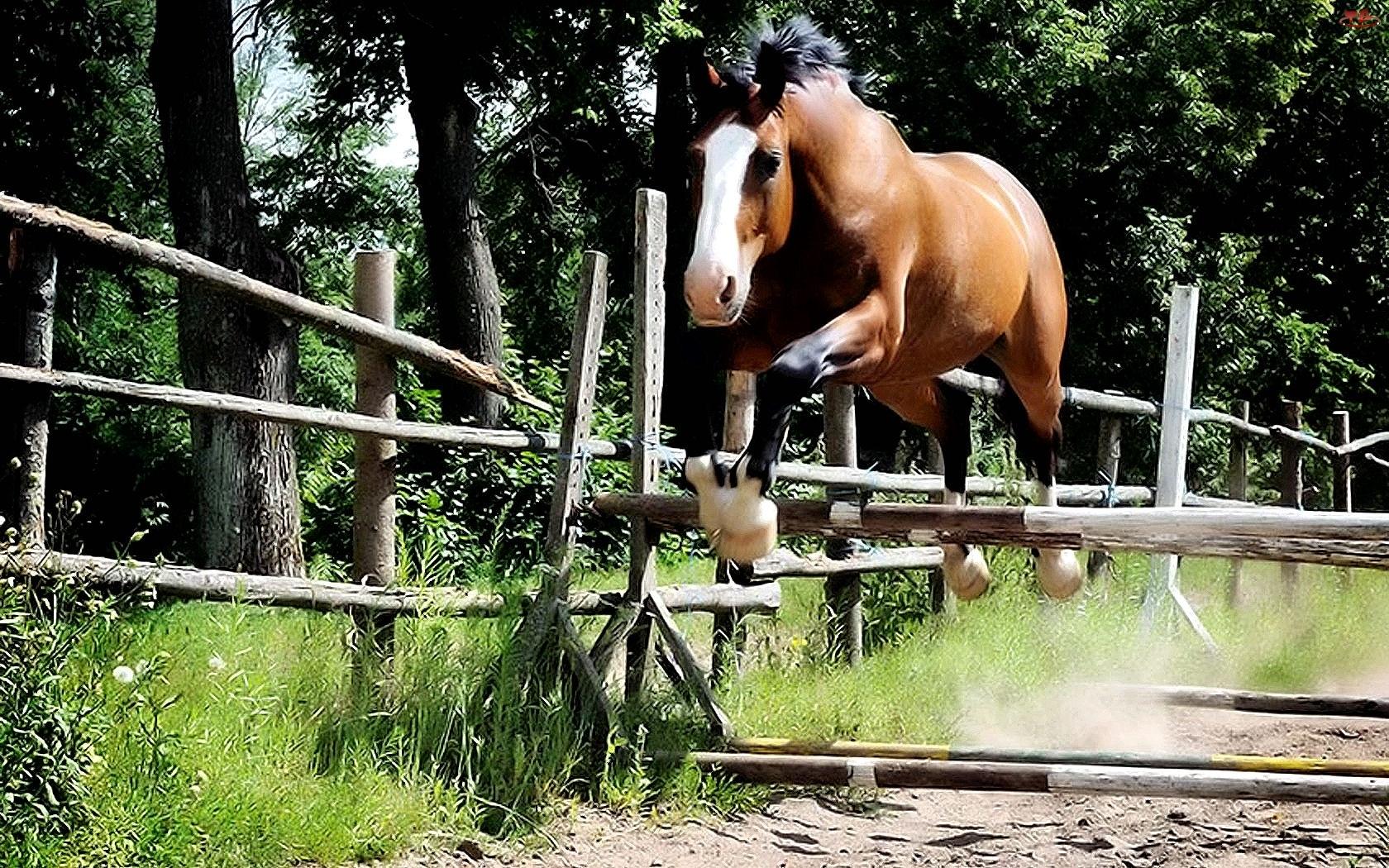 Skok, Koń, Przeszkoda