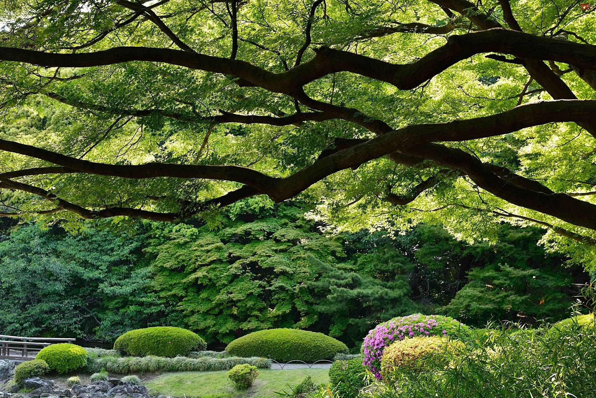 Mostek, Park, Drzewo, Rozłożyste, Klomby