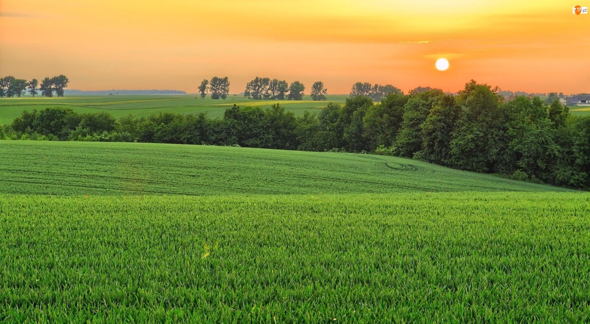 Zachód, Drzewa, Słońca, Pola
