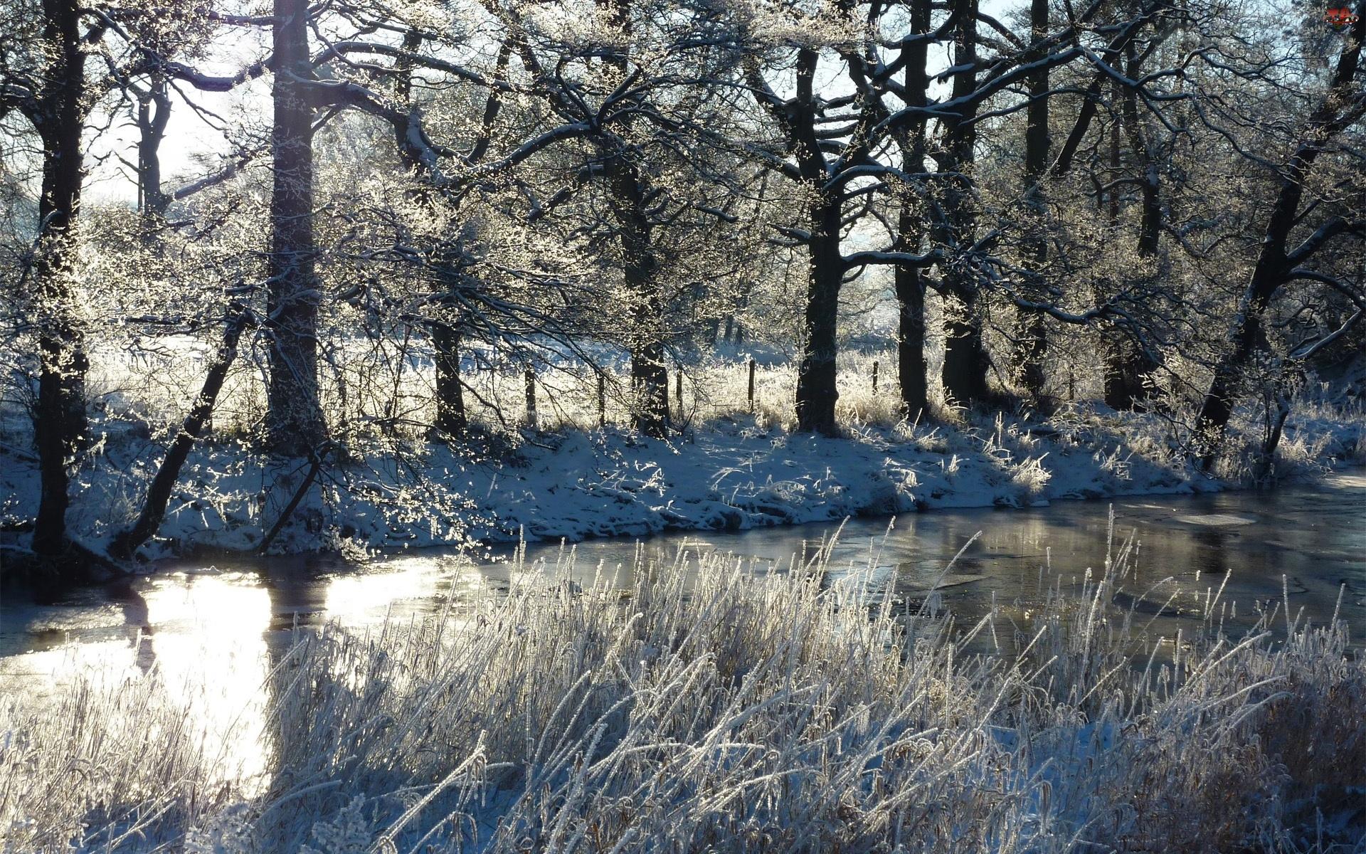 Rzeka, Zima, Drzewa, Trawy