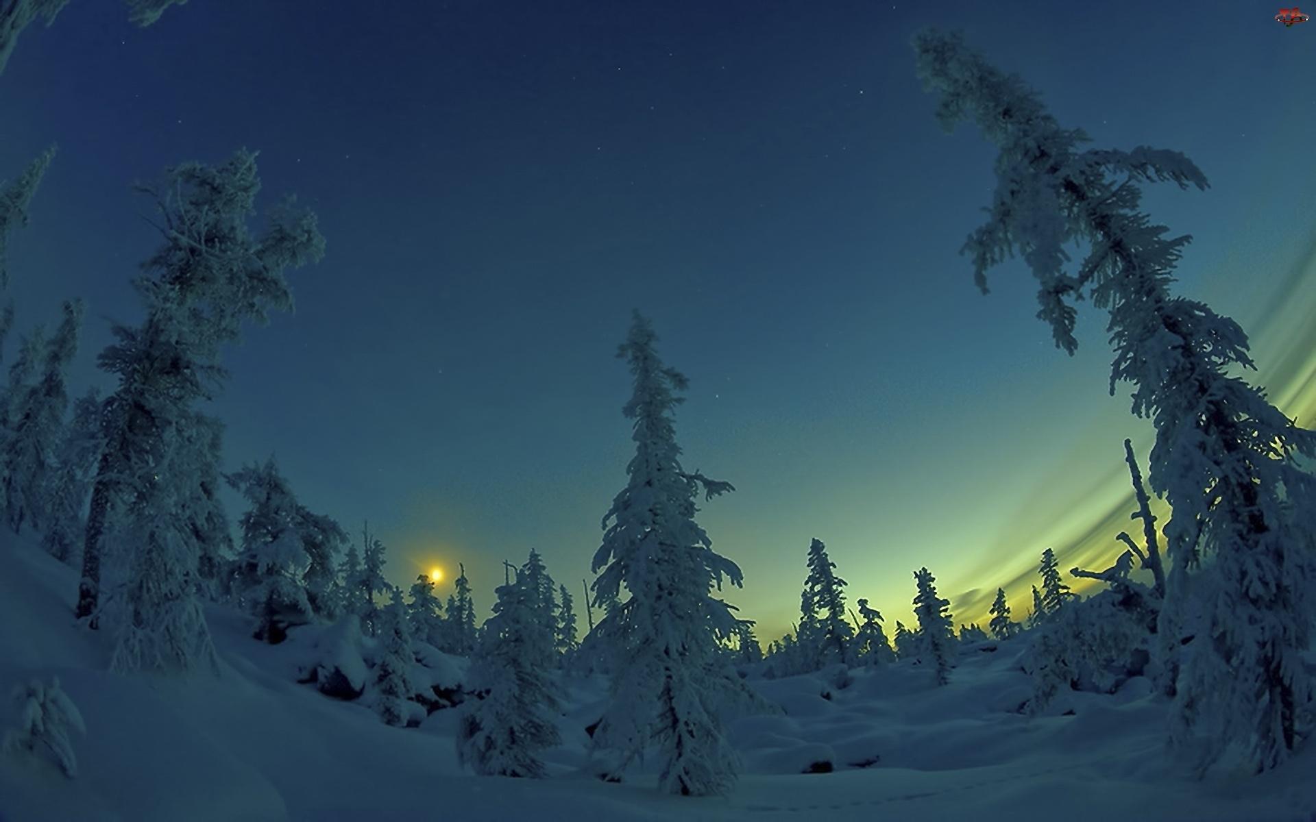 Śnieg, Zmierzch, Drzewa