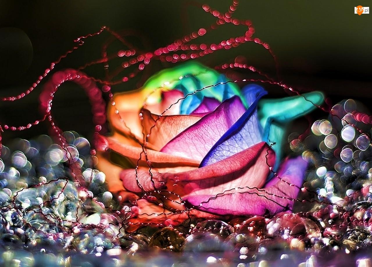 Grafika, Kolorowa, 3D, Róża, Wektorowa