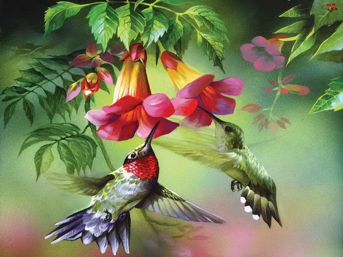 Kwiaty, Dwa, Kolibry
