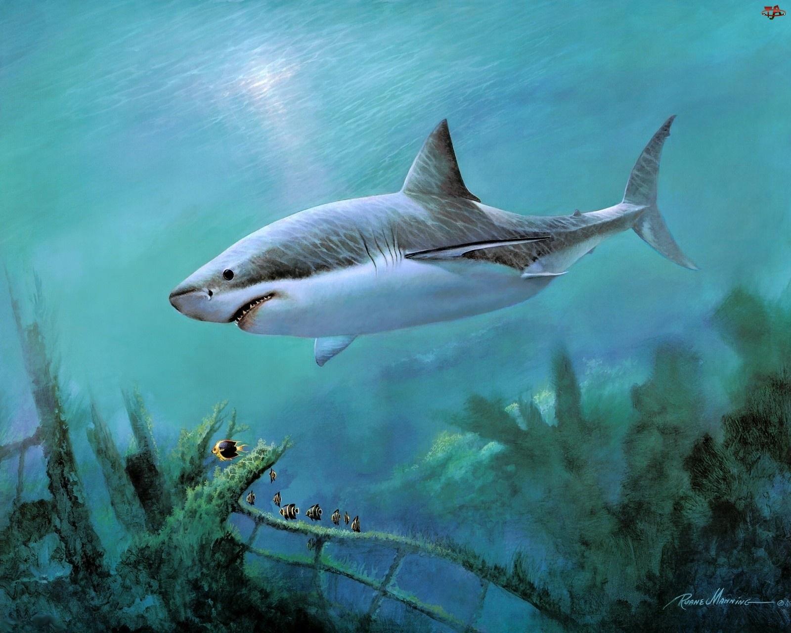 Rekin, Głębia