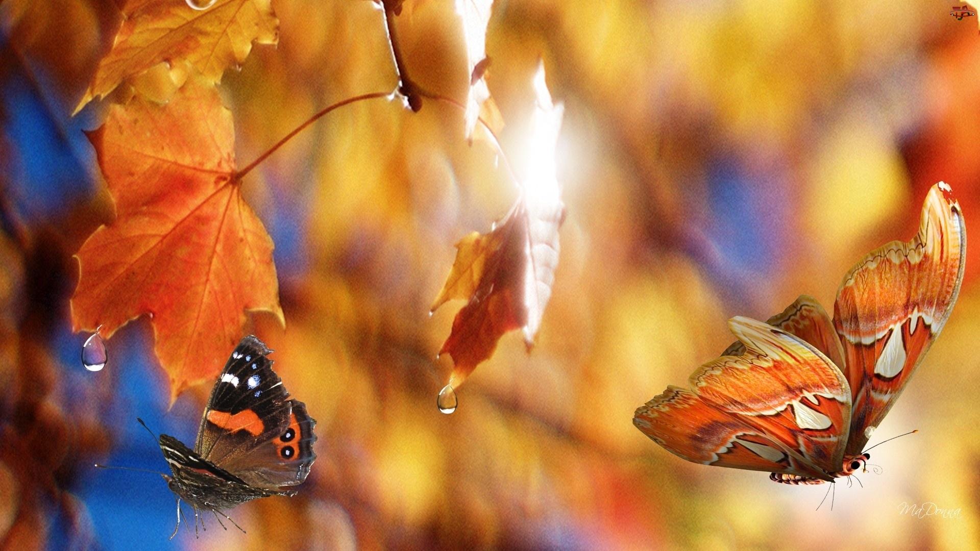 Liście, Jesień, Klonu, Motyle