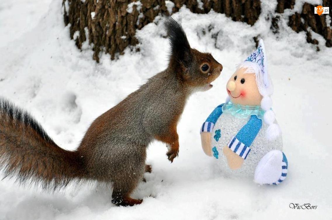 Śnieg, Wiewiórka, Lalka