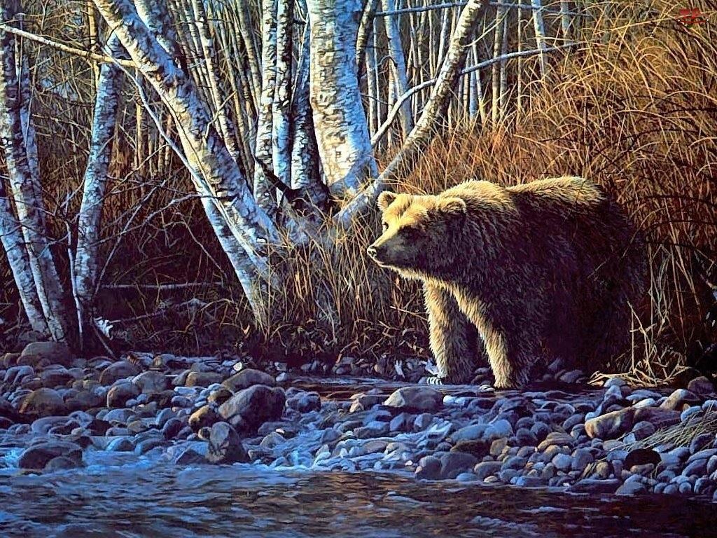 Rzeka, Niedźwiedź, Brzoza