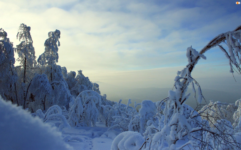 Zima, Niebo, Drzewa