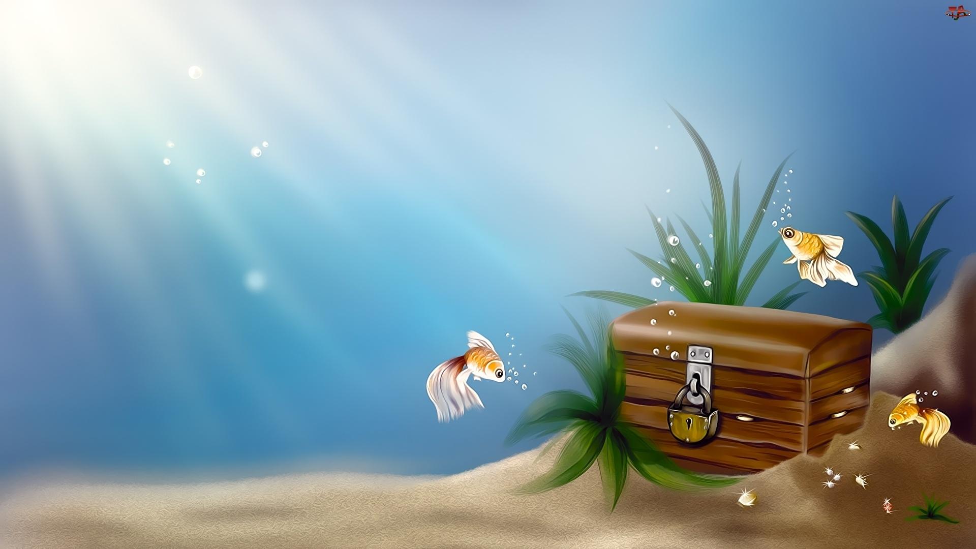 Dno, Ryby, Morza, Skrzynia