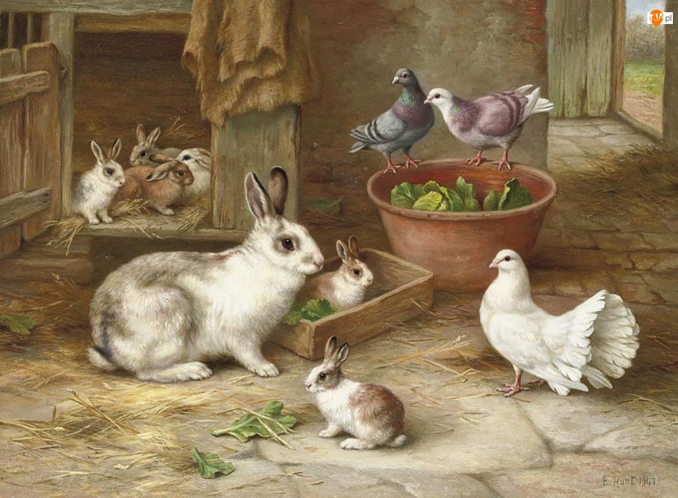 Króliki, Edgar Hunt, Gołębie, Klatka
