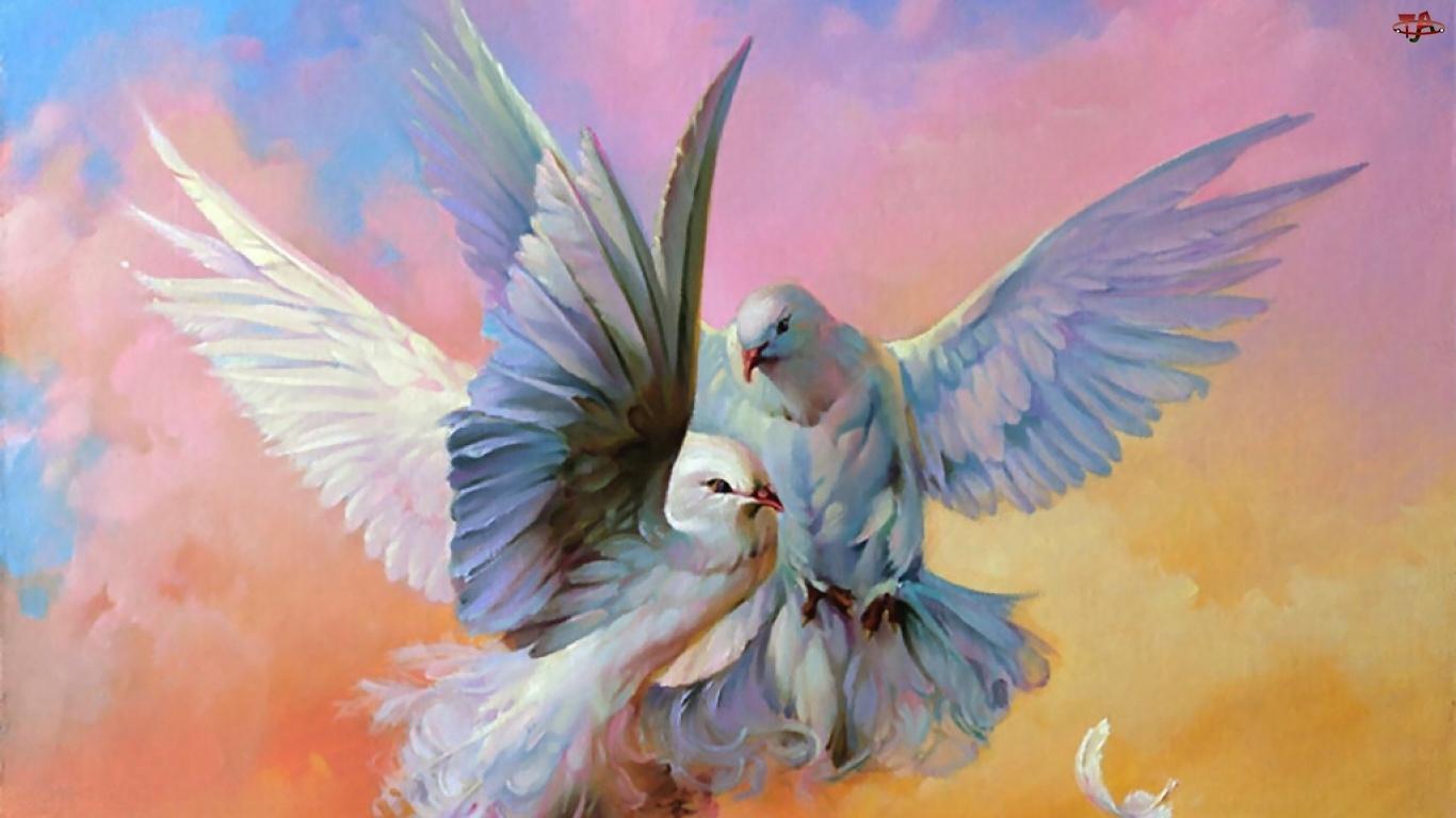 Miłość, Gołębie, Parka