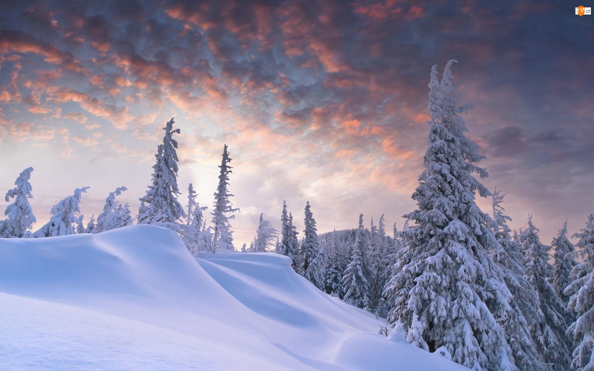 Chmury, Zima, Las, Śnieg