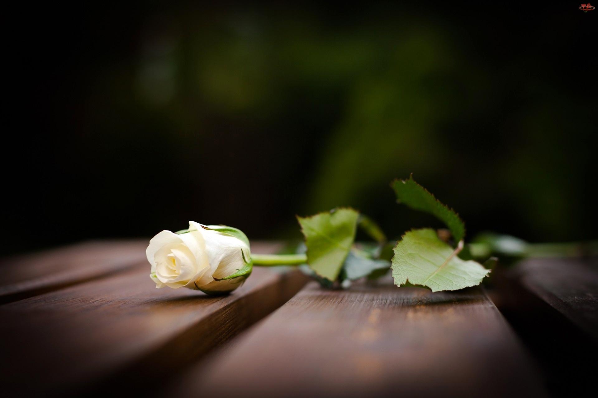 Ławka, Biała, Róża