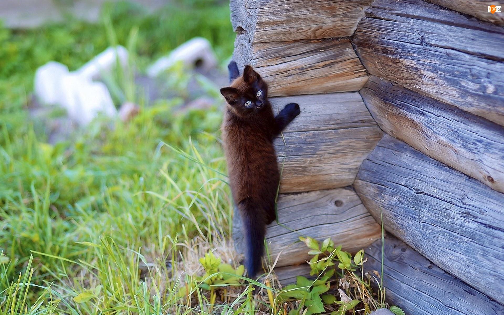 Kotek, Wspinający, Się