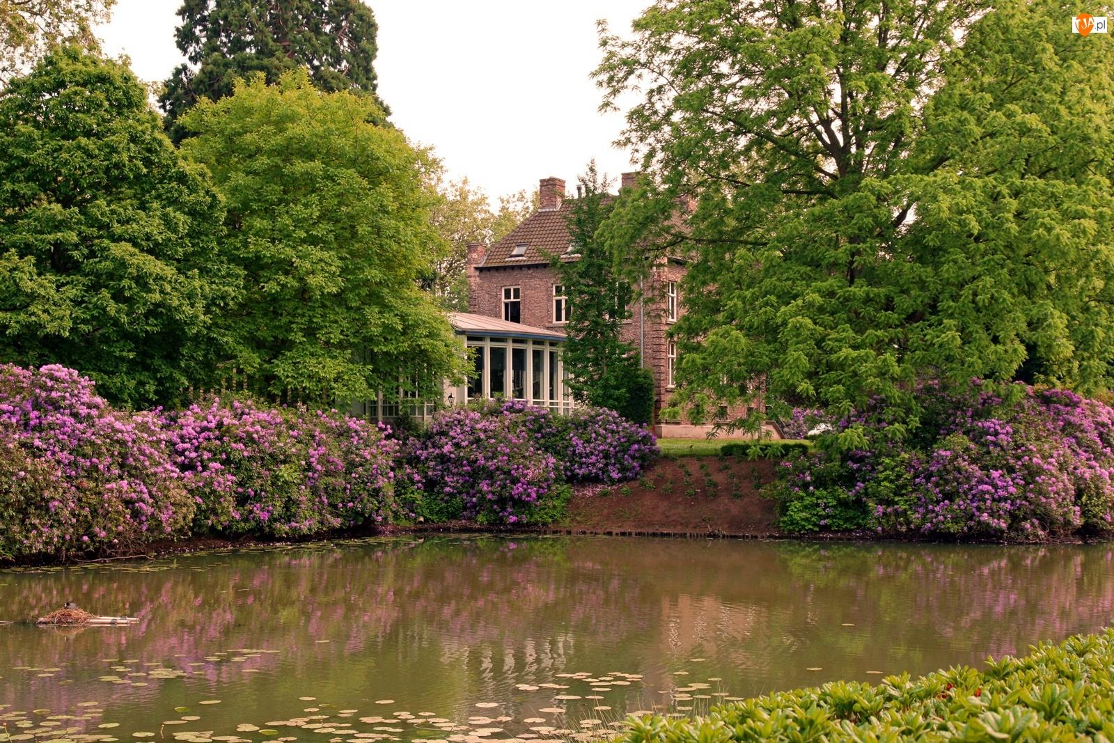 Rododendrony, Dom, Staw, Posesja, Drzewa