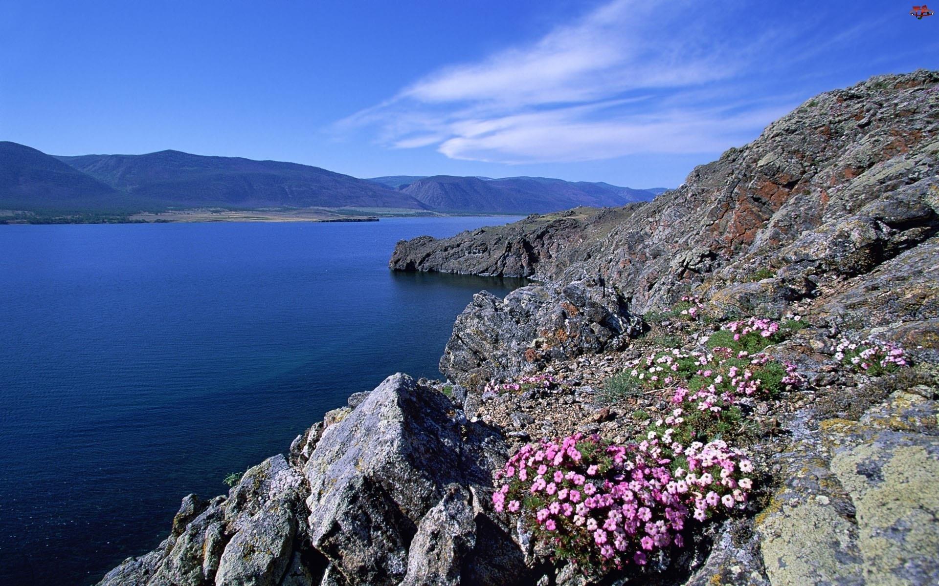 Rzeka, Kwiaty, Góry, Skały