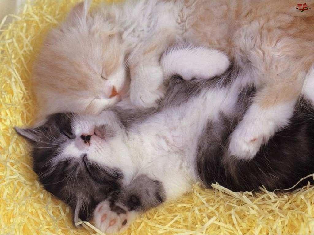 Kotki, Dwa, Śpiące