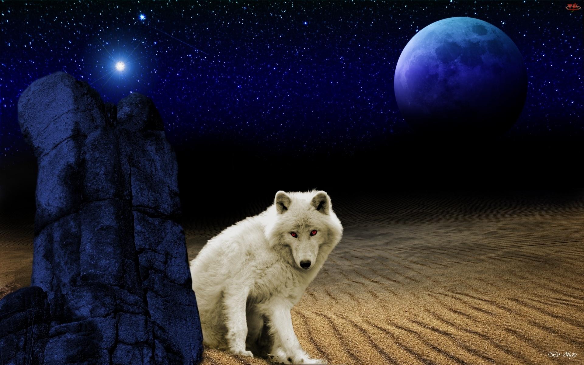 Biały, Księżyc, Wilk, Pustynia
